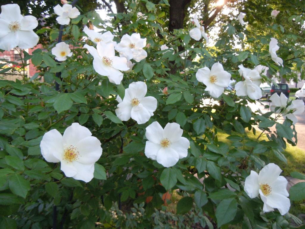 garden-pictures-054
